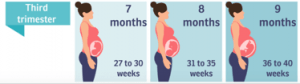 Midwife Zwolle third trimester