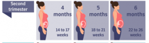 Midwife Zwolle second trimester