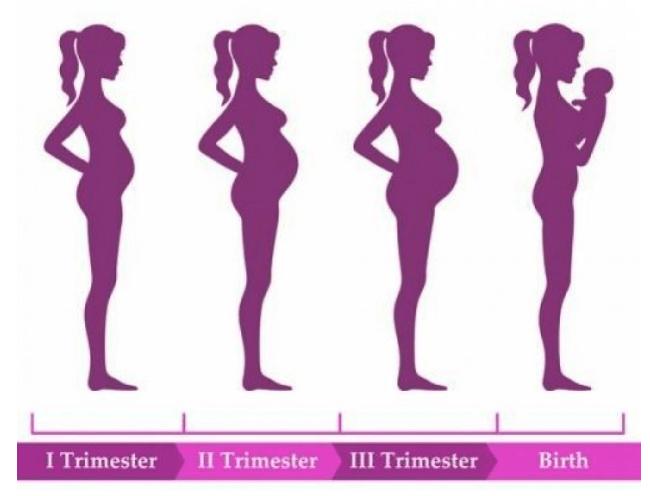 Verloskundige zwolle fases van de zwangerschap